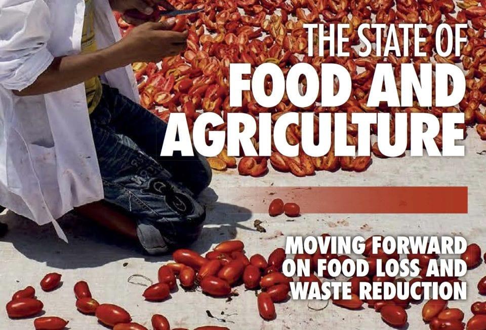Samen Tegen Voedselverspilling - Nieuws - FAO Rapport